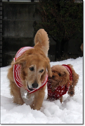 2010,1,16雪遊び4