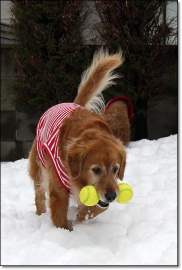 2010,1,16雪遊び2