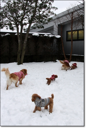 2010,1,16雪遊び1