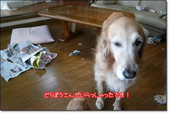 2010,1,17お散歩11