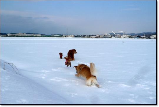 2010,1,18お散歩13
