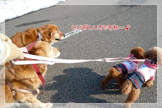 2010,1,19お散歩5