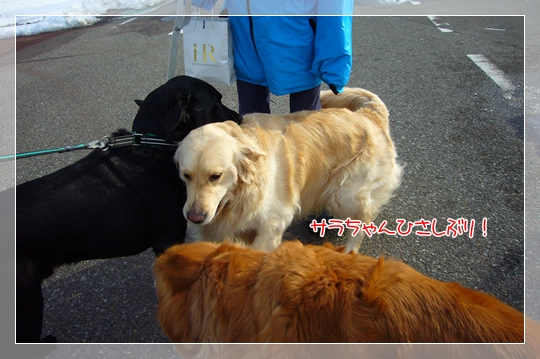 2010,1,20お散歩2
