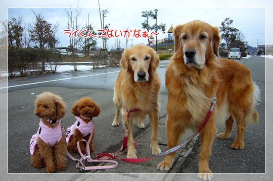 2010,1,20お散歩7