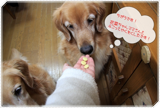 2010,1,22お散歩5