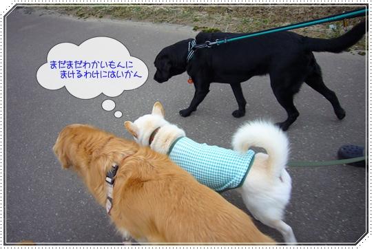 2010,1,22お散歩11