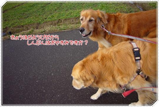 2010,1,23お散歩2