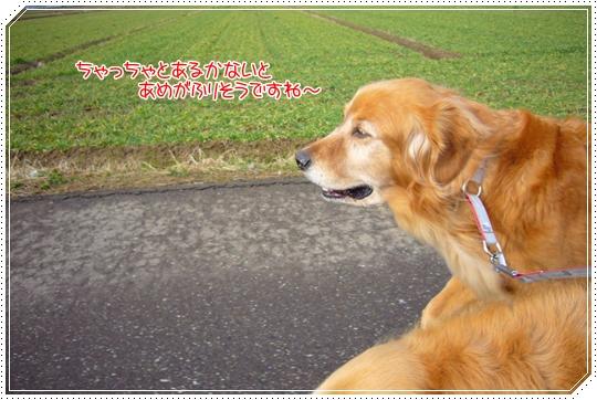 2010,1,23お散歩1