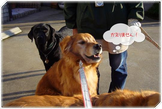 2010,1,26お散歩11