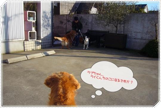 2010,1,26お散歩9