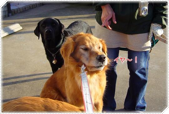 2010,1,26お散歩12