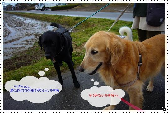 2010,1,28お散歩5