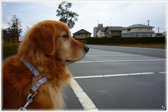 2010,1,28お散歩4