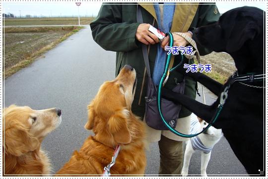 2010,1,28お散歩7