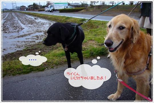 2010,1,28お散歩6