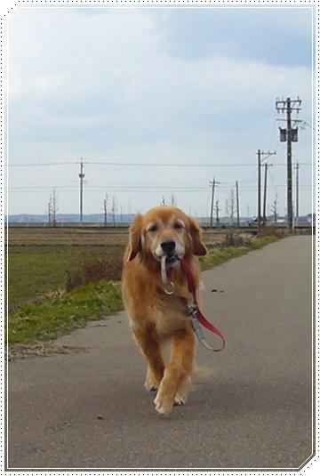 2010,1,30お散歩3