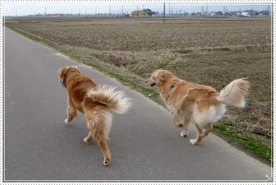 2010,2,1お散歩6