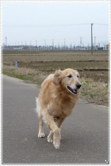 2010,2,1お散歩4