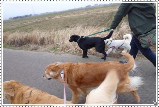 2010,2,1お散歩14