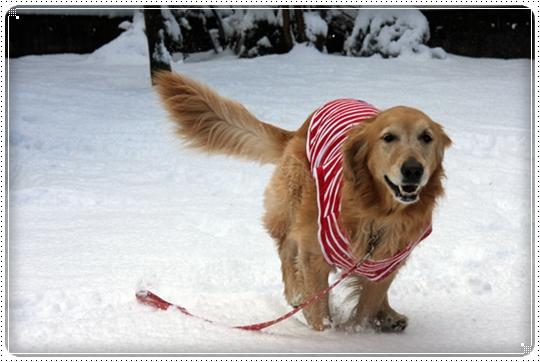 2010,2,4雪遊び5