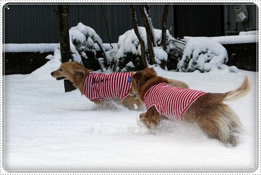 2010,2,4雪遊び4