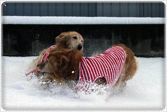 2010,2,4雪遊び3