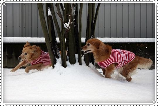 2010,2,4雪遊び2