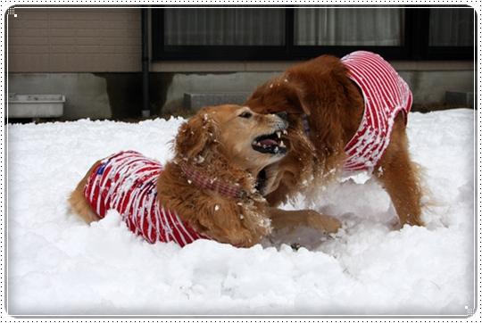 2010,2,4雪遊び12