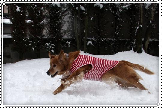 2010,2,4雪遊び11