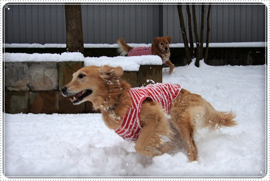2010,2,4雪遊び10