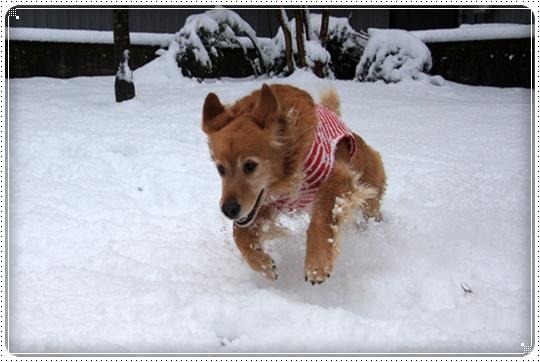 2010,2,4雪遊び8