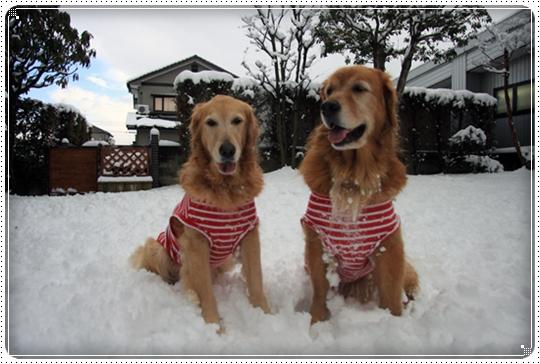 2010,2,4雪遊び16