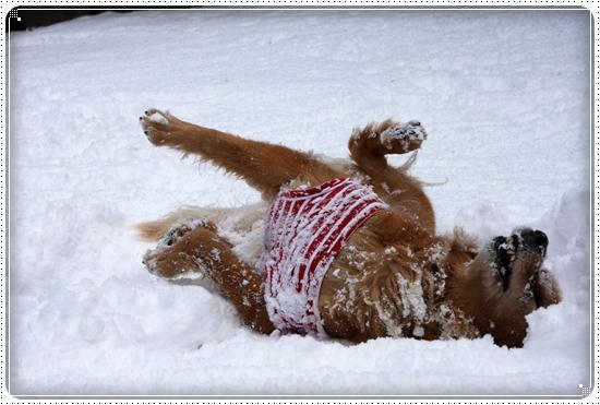 2010,2,4雪遊び17