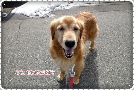 2010,2,7お散歩4