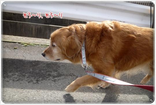 2010,2,7お散歩3