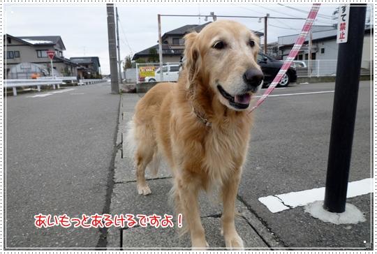 2010,2,8お散歩1
