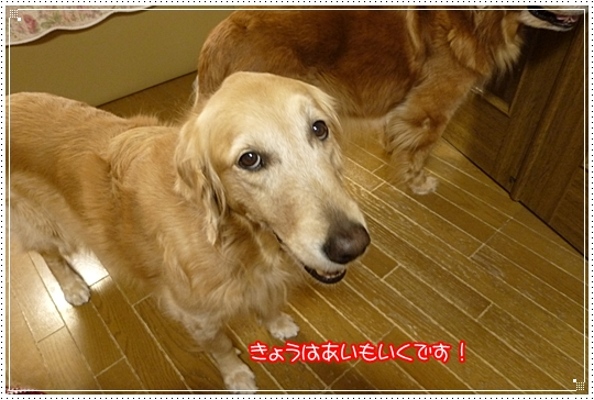 2010,2,9お散歩1