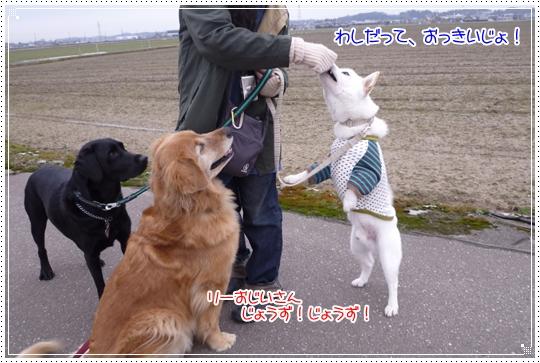 2010,2,9お散歩8