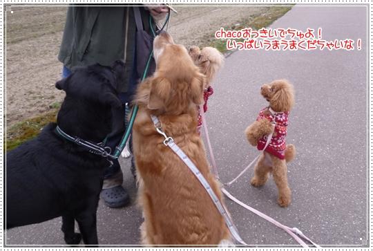 2010,2,9お散歩7