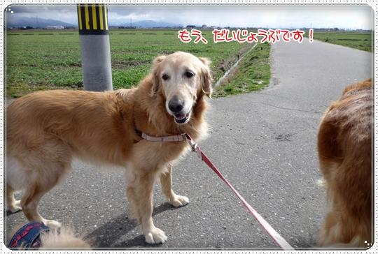 2010,2,13お散歩7