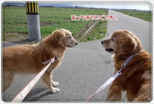 2010,2,13お散歩6