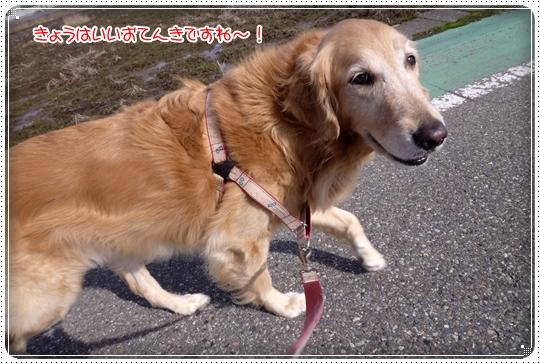 2010,2,14お散歩2