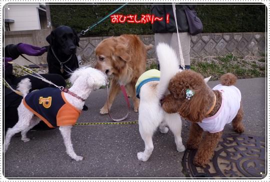 2010,2,14お散歩10