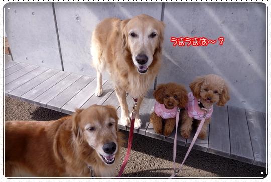 2010,2,14お散歩8