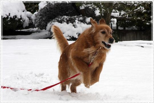 2010,2,17雪遊び9