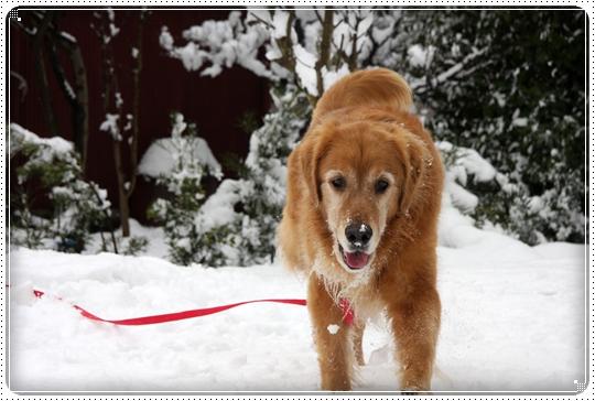 2010,2,17雪遊び15