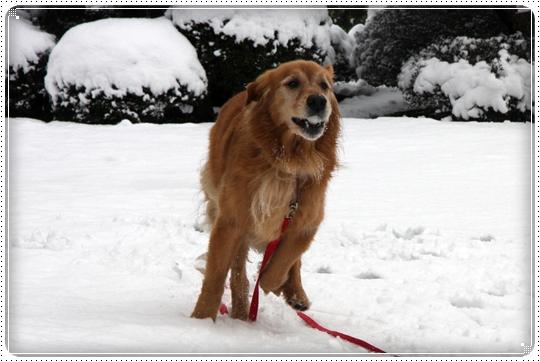 2010,2,17雪遊び12