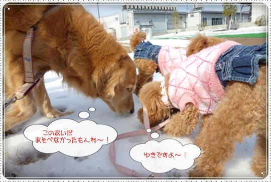 2010,2,20お散歩2