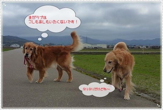 2010,2,27お散歩5