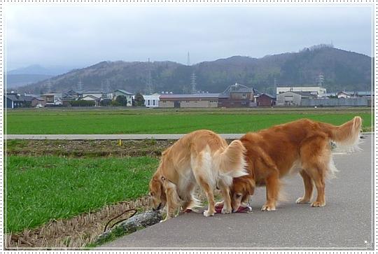 2010,2,27お散歩3